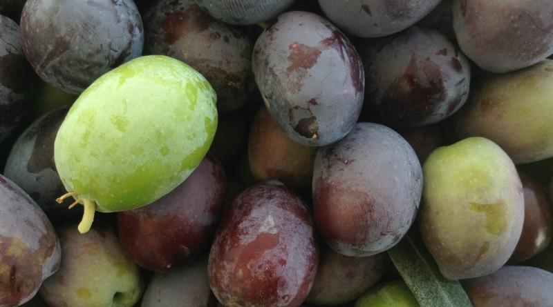 Opskrift: Sådan laver du oliven spiselige