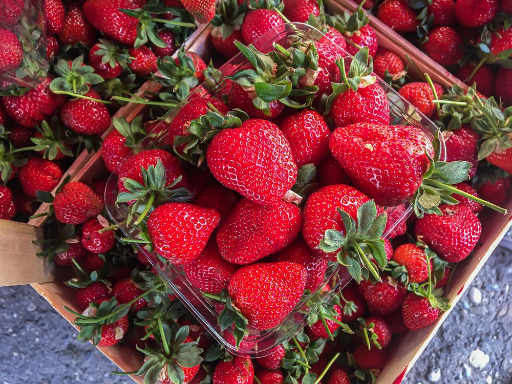 Friske jordbær, de bedste jordbær, sådan finder du de bedste jordbær, danske jordbær, hvilke jordbær smager bedst, de bedst smagende jordbær, pluk selv jordbær, pluk dine egne jordbær