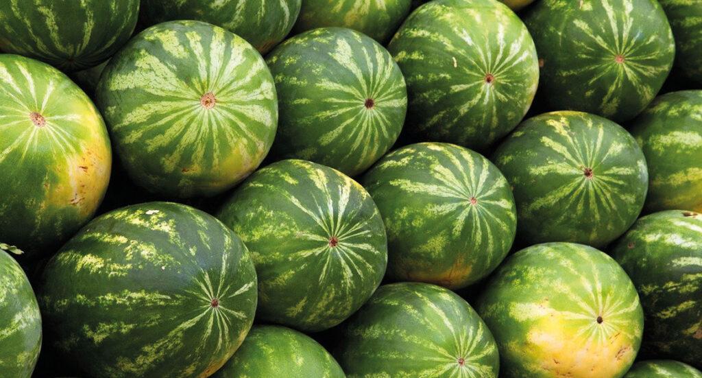 vandmelon, guide til vandmelon, den bedste vandmelon, find en god melon, hvordan ved man en vandmelon er god